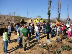 O Projeto '100 Mil Árvores na AMP' na Foz do Sousa / Direitos Reservados