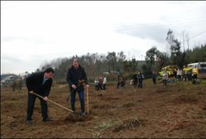 Plantação de 600 árvores em Covelo / Direitos Reservados
