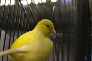 O Multiusos recebeu mais de 4000 aves / Foto: Pedro Santos Ferreira