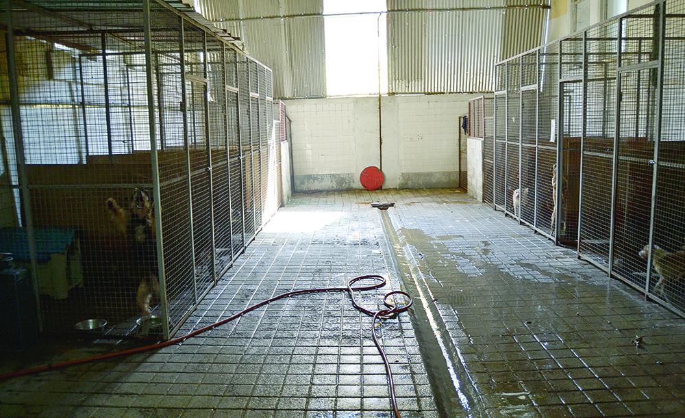 Sociedade Protetora dos Animais do Porto / Foto: Ricardo Vieira Caldas