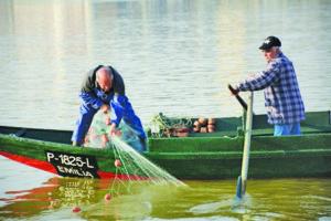 O Município fez o balanço da captura da lampreia / Foto: Direitos Reservados