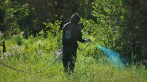 Gondomar está a procurar uma alternativa ao herbicida em utilização / Foto: Direitos Reservados