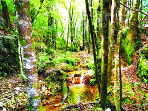 3.º Trail das Nozes - outubro 2016