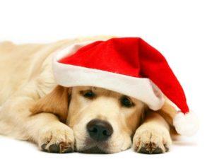 O Natal do Seu Animal - novembro 2016