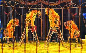 Circo sem animais em Rio Tinto - dezembro 2016
