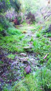 Trail da Lomba - maio 2017