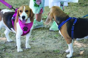 Rio Tinto Cão e Gato - junho 2018