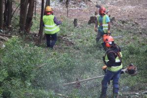 Limpeza florestas - junho 2018